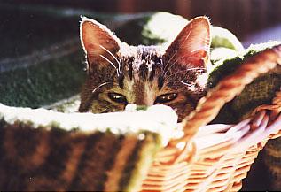 Cat10p