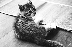 Cat3ap