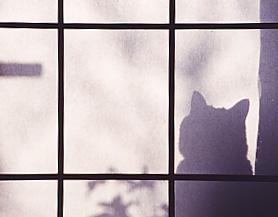 Shadow_2p